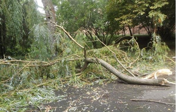 Негода ледь не знищила дендропарк Заліщицького агроколеджу