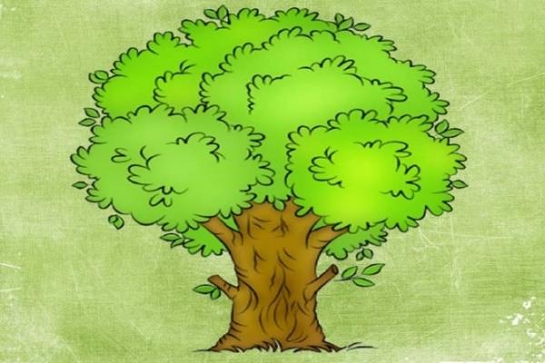 У Тернополі спробують змінити клімат за допомогою спецільних дерев