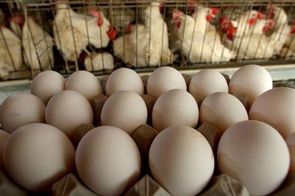 Україна випередила США і стала головним експортером яєць до Європи