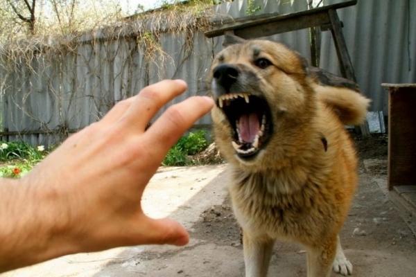 Зграя бродячих псів накинулася на тернопільську пенсіонерку (Фото)