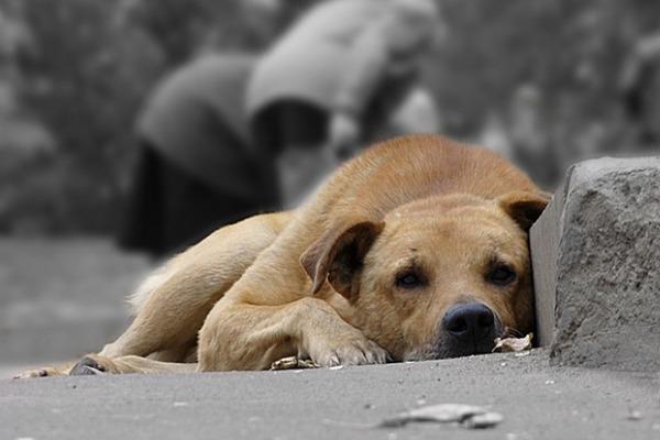 """Людмила Чеховська: """"Таке враження, що в Тернополі ситуацію із безпритульними тваринами переклали на плечі волонтерів"""""""