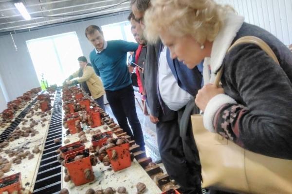 Равликову ферму на Тернопільщині оцінили німці