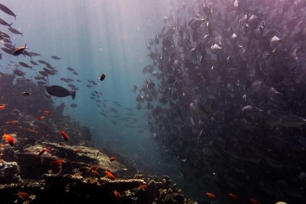 Ось до чого техніка дійшла: Microsoft запустила трансляцію з морського дна