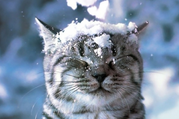 Синоптики дали прогноз, коли українцям чекати снігу