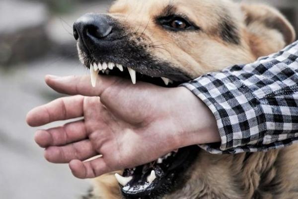 Скажений пес покусав 12 людей