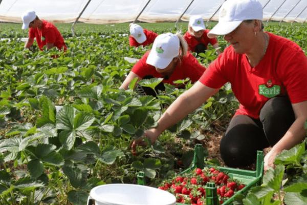 Сусіди залишаться без роботящих рук: заробітчани планують переїздити з Польщі