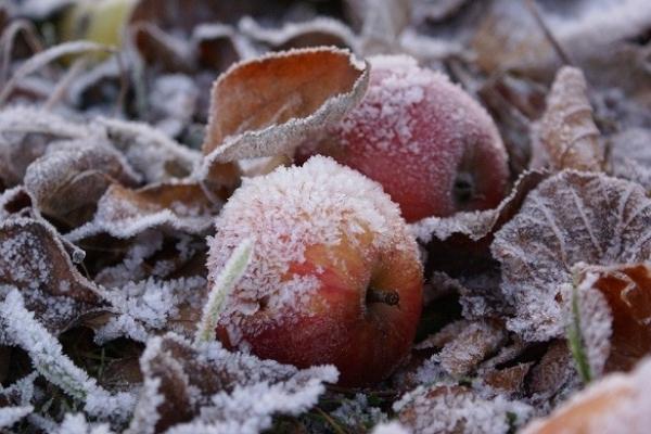 Синоптики попереджають про сильні заморозки у найближчі дні