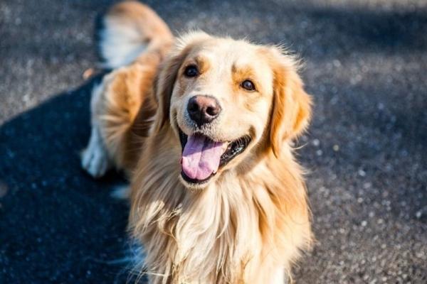 Собаки допомагають власникам жити довше – дослідження