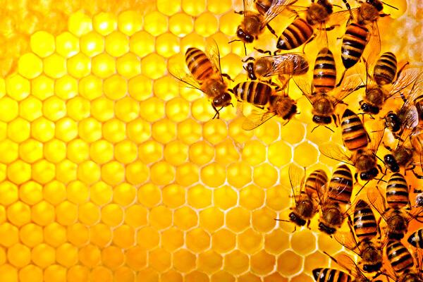 Українським бджолярам придумали «медову біржу» для експорту меду