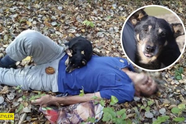Закарпатський пес отримав звання «Герой року»: він здійснив неймовірне!