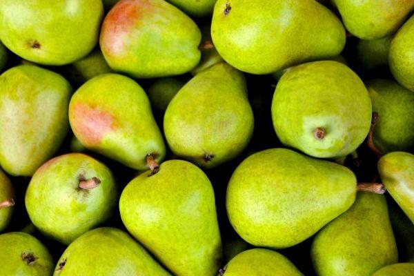 Побережіть шлунок: кому варто відмовитися від вживання груш